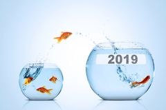 Golden fish with number 2019 on larger aquarium. Image of golden fish leaping to larger aquarium with numbers 2019 stock photo