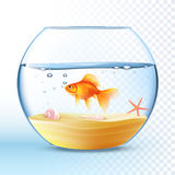 Golden Fish In Round Bowl Poster Stock Image