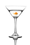 Golden fish swimming in cocktail Royalty Free Stock Photos