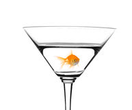 Golden fish swimming in cocktail. Golden fish swimming in martini cocktail isolated against white background stock photos