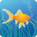 Golden fish under water. Golden fish on the blue underwater background with seaweed Royalty Free Stock Photography