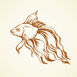 Golden fish. Vector drawing. Big orange carp isolated on white backdrop. Freehand outline ink hand drawn picture sketchy in retro scribble style pen on paper Stock Photos