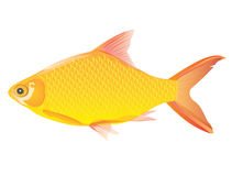 Golden fish Stock Photo