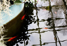 Golden fishes in the pond Royalty Free Stock Images