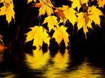 Golden flame maple leaves over water Stock Photo