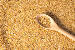golden flax seed or linseed Royalty Free Stock Image