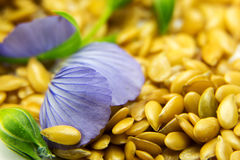 Golden flax seeds with blue flower petals Royalty Free Stock Photography