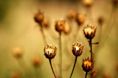 Golden flovers. Beautiful golden flovers in forest Stock Photography
