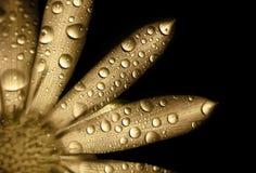 Free Golden Flower Stock Image - 54390411