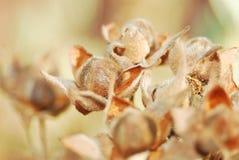 Golden flower. Bouquet of golden flowers from dryness Stock Images