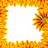 Golden Flower Frame Stock Photo