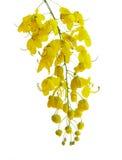 Golden flower Royalty Free Stock Photos