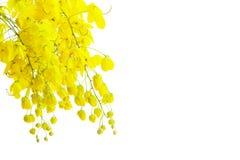 Golden flower Stock Image