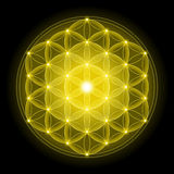 Golden Flower of Life on Black Background Stock Photography