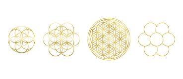 Free Golden Flower Of Life Seed Egg Of Life Royalty Free Stock Photo - 175946915