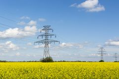 Golden flowering field of rapeseed, electric poles. Of high-voltage lines royalty free stock photography