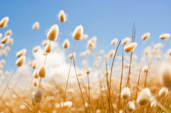 Golden Flowers in Field with Sky Stock Image