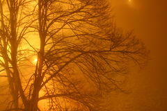 Golden fog Royalty Free Stock Image