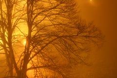 Golden fog. Golden tree in the  fog Royalty Free Stock Image