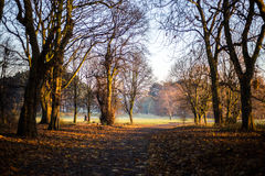 Golden fog over Sefton Park. And people having a walk Stock Photos