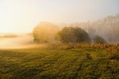 Golden foggy sunrise by the river. Meadow and tree in fog on river bank in golden sunrise lighting early morning in spring. River Luznice, Czech republic Stock Photo