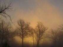 Golden Foggy Sunrise with Trees Silhouette Royalty Free Stock Image