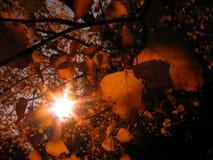 Golden foliage. Sunny autumn background Stock Images