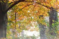 Golden foliage in autumn Stock Photos