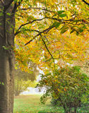 Golden foliage in autumn Royalty Free Stock Image