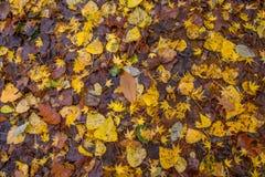 Golden foliage texture Stock Photography