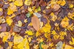 Golden foliage texture Stock Photo