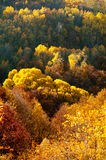 Golden forest Royalty Free Stock Photography