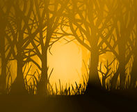 Golden forest. Stock Photo