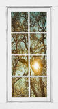 Golden Forest  Branches White 8 Windowpane View Stock Images