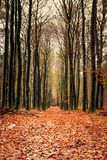 Golden forest during fall Stock Photos