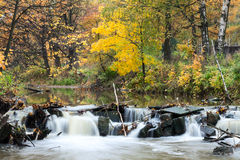 Golden forest with flowing river water through stones at autumn, long exposure Royalty Free Stock Photography