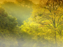Golden Forest and Fog Stock Photo