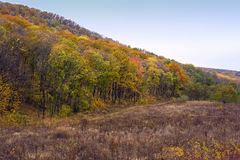 Golden forest near marzoaia village Royalty Free Stock Photos