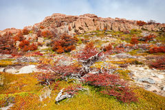 Golden forest in Patagonia Stock Image
