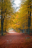 Golden forest path. A golden forest path during autumn season Stock Image