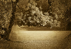 Golden sepia tone forest Stock Photography