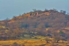 Golden forest of Ranthambhore Stock Images