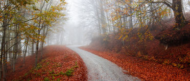 Golden Forest Road Stock Images