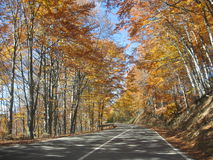 Golden forests. Autumn, golden time, route, sky,light through yellow leaves Royalty Free Stock Images