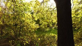 Golden Forrest in the sun. Autumn forest in the sun with leaves falling from the trees