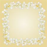 Golden frame with Jasmine  vector Royalty Free Stock Photos