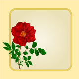 Golden frame with red rose vector. Golden frame with  red  rose greeting card festive background place for text vector illustration Stock Photo