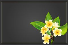 Golden frangipani or plumeria flowers with leaves. Vector invitation Postcard stock illustration