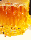 Golden fresh Honeycomb and bee pollen.  close up Royalty Free Stock Images