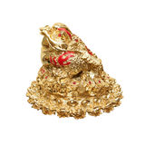 Golden frog from China. The symbol of Feng Shui Royalty Free Stock Photography